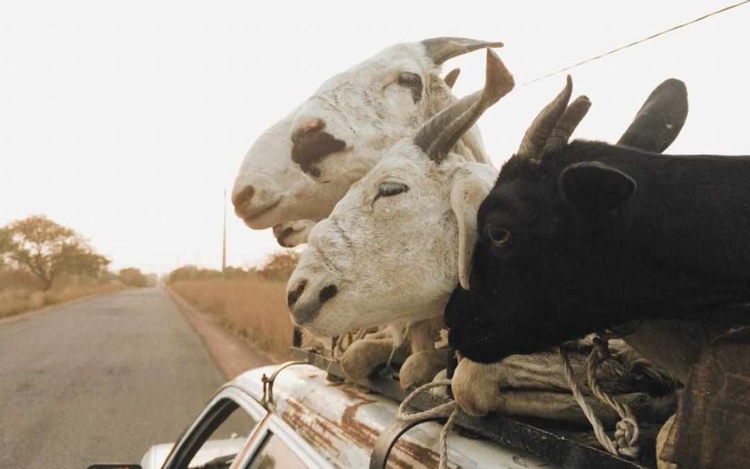 Viajando en sept-place por Senegal
