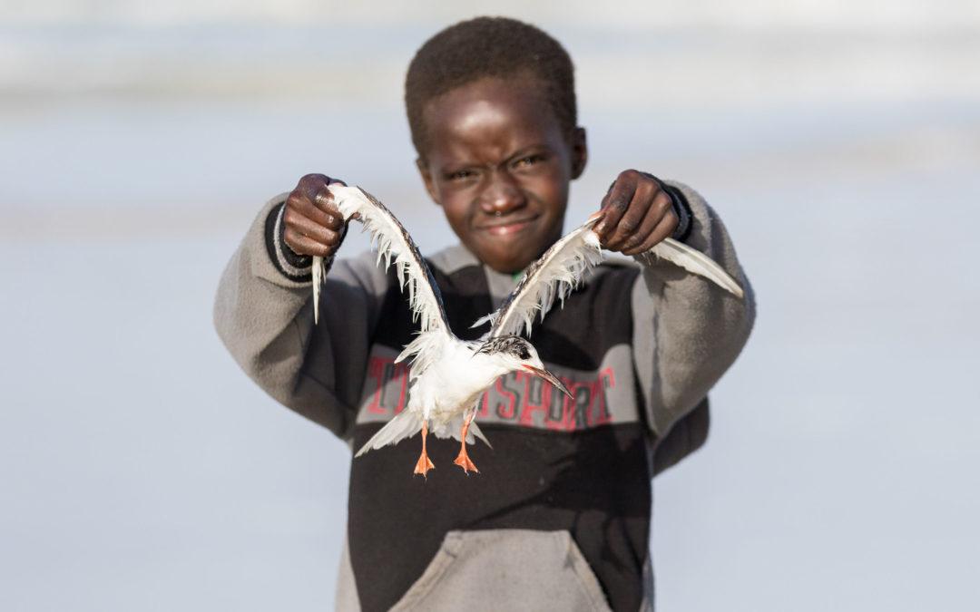 Pescando un pájaro con sedal y anzuelo