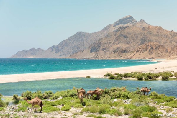 Fotografiar naturaleza en Omán